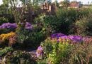 Az őszi kert legszebb virágai